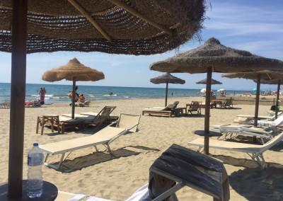 spiaggia-calambrone15